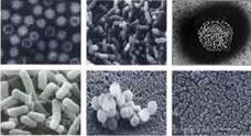 ジア除菌が効果を発揮する菌