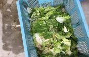 カット野菜の端材等