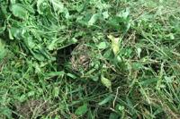 オプションの「フラット爪」を装着することで草も粉砕可能。