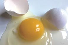 卵と卵の殻