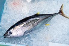 魚(骨含む)