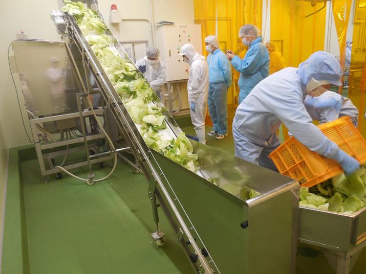芯や廃棄する葉を投入台からコンベアで粉砕機へ運びます。